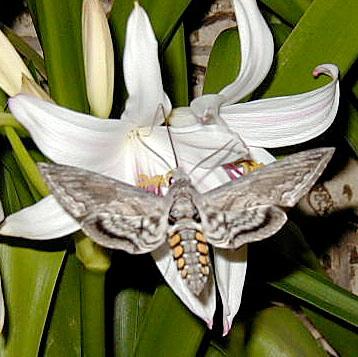 An entomology lesson on larvae metamorphosis - 1 9